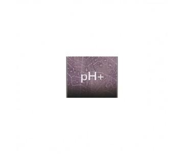 Correttore pH+ 1L