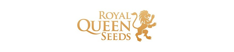 royal queen seeds , seeds bank , seeds , semi da collezione