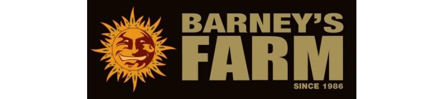 barney's farm , seeds bank , seeds , semi da collezione